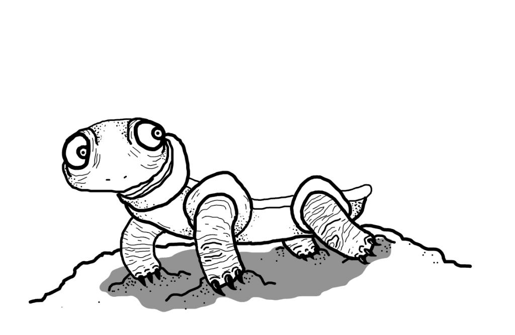 Dibujos De Tortugas Para Colorear Turtle Pet
