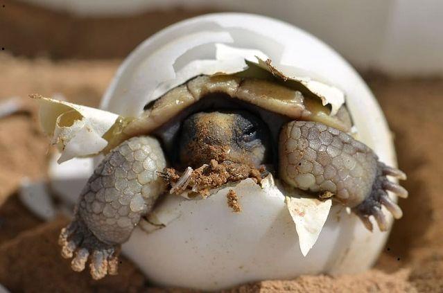 Nacimiento de tortuga